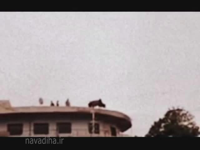 کلیپ خود کشی یک گاو برای فرار از سر بریده شدن